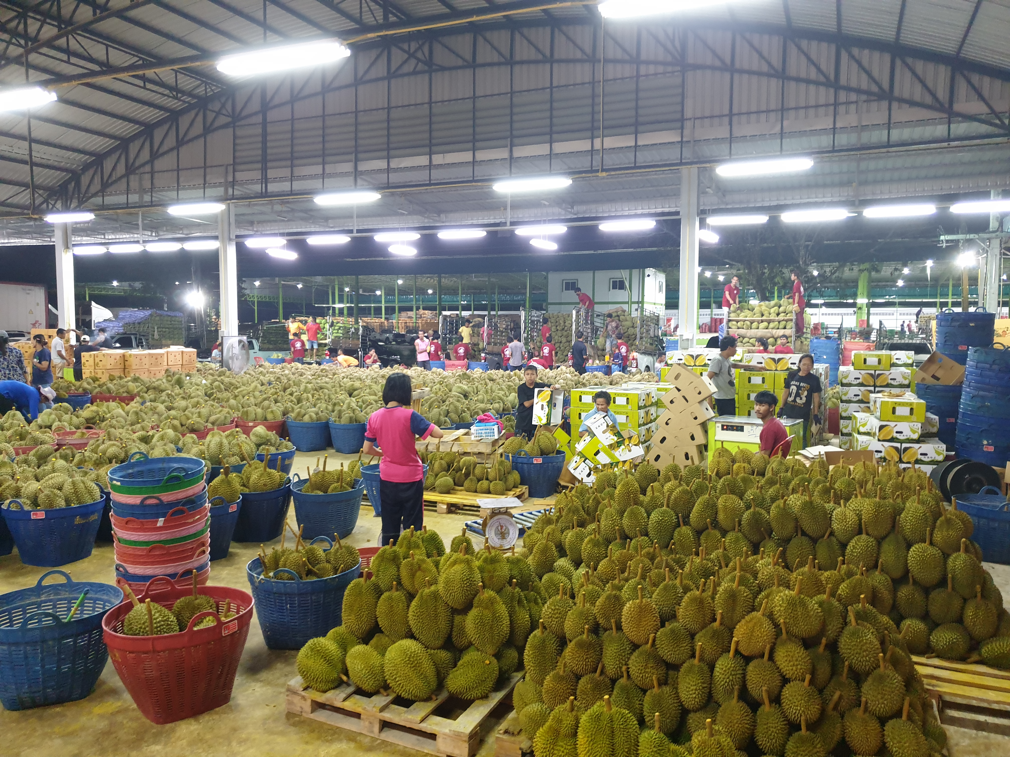 Thailand Fresh Durian Packing House